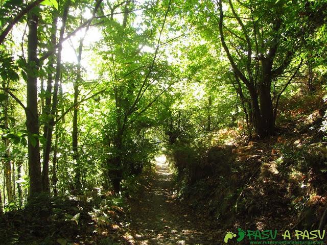 Bosque sombrío bajando de El Puelo