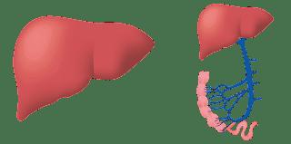 افضل علاجات دهون الكبد