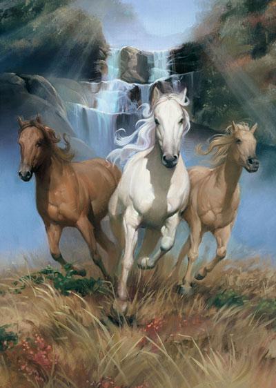 Cavalos Selvagens Mundo Animal Imagens Em V 237 Deo