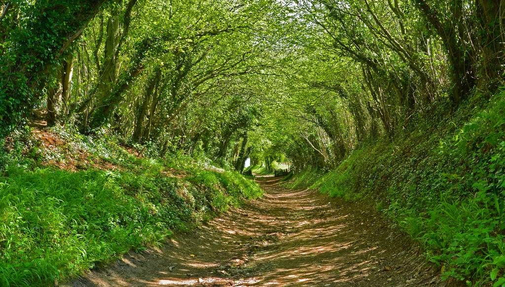 Beautiful Tree Tunnels [12 Pic] ~ Awesome Pictures
