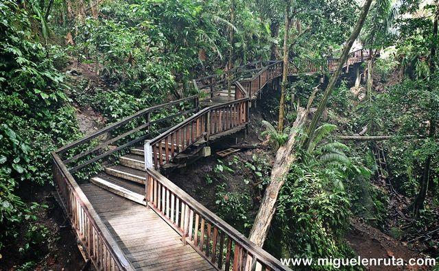Senderos-Monkey-Forest