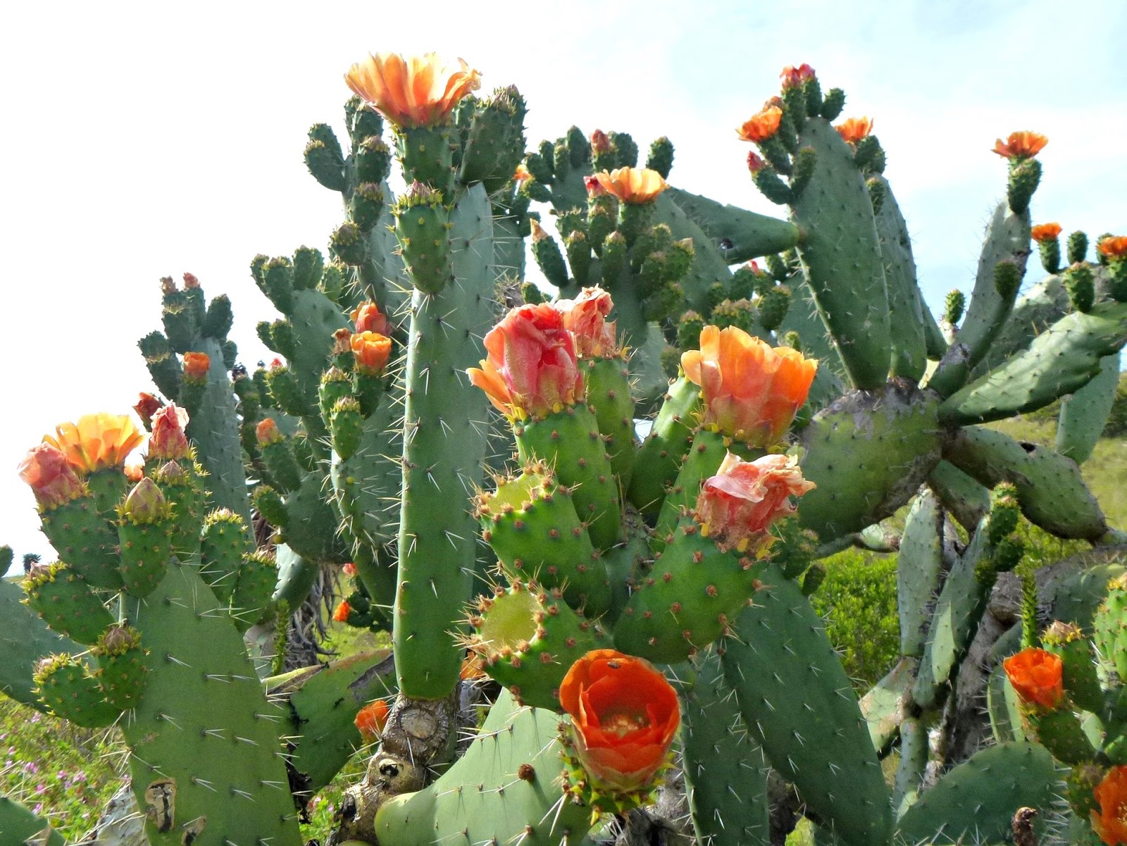 Urban Ministry Live And Unplugged Flowering Cactuses