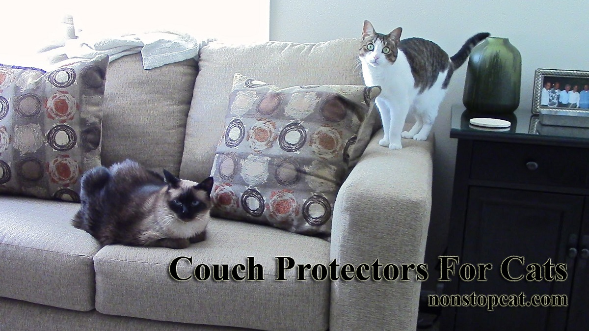 Couch Protectors For Cats