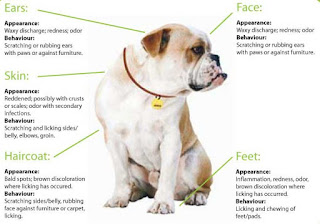 A Few Things to Know About Atopica For Dogs