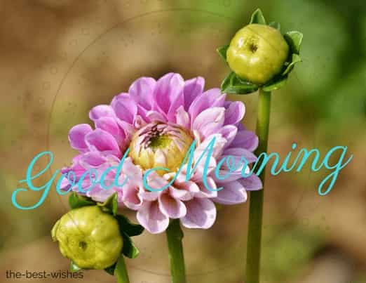 good morning flowers image with bud