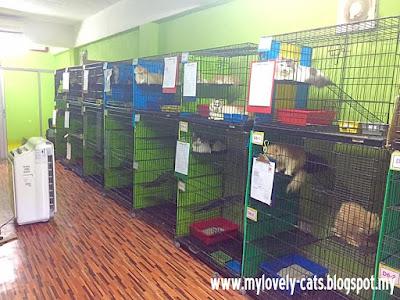 cat room 4a