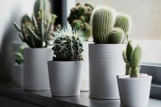 DIY Projek Terrarium Kaktus