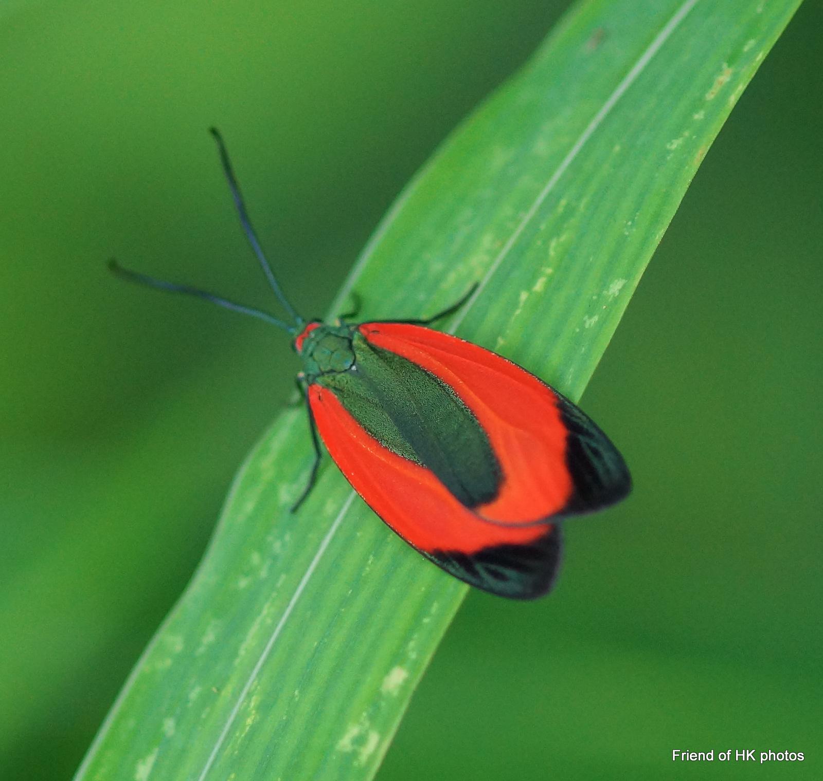 Photographic Wildlife Stories In UK/Hong Kong: Moths In