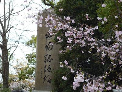 桜と蓮如六字名号碑