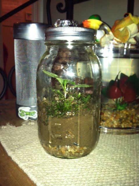 Dirt Don T Hurt Bring Dirt Into Your House Mason Jar Terrarium