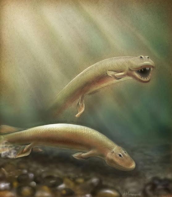 Tiktaalik-peixe
