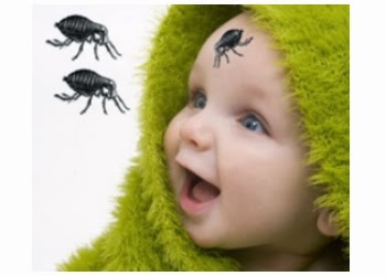 Les piqûres de puces sur les bébés