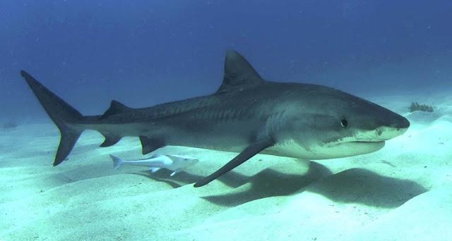 """Cần chuẩn bị những gì phòng khi """"cá mập"""" vẫn tiếp tục cắn cáp?"""
