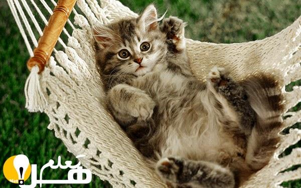 b2cae8fe2 معلومات عامة حول القطط