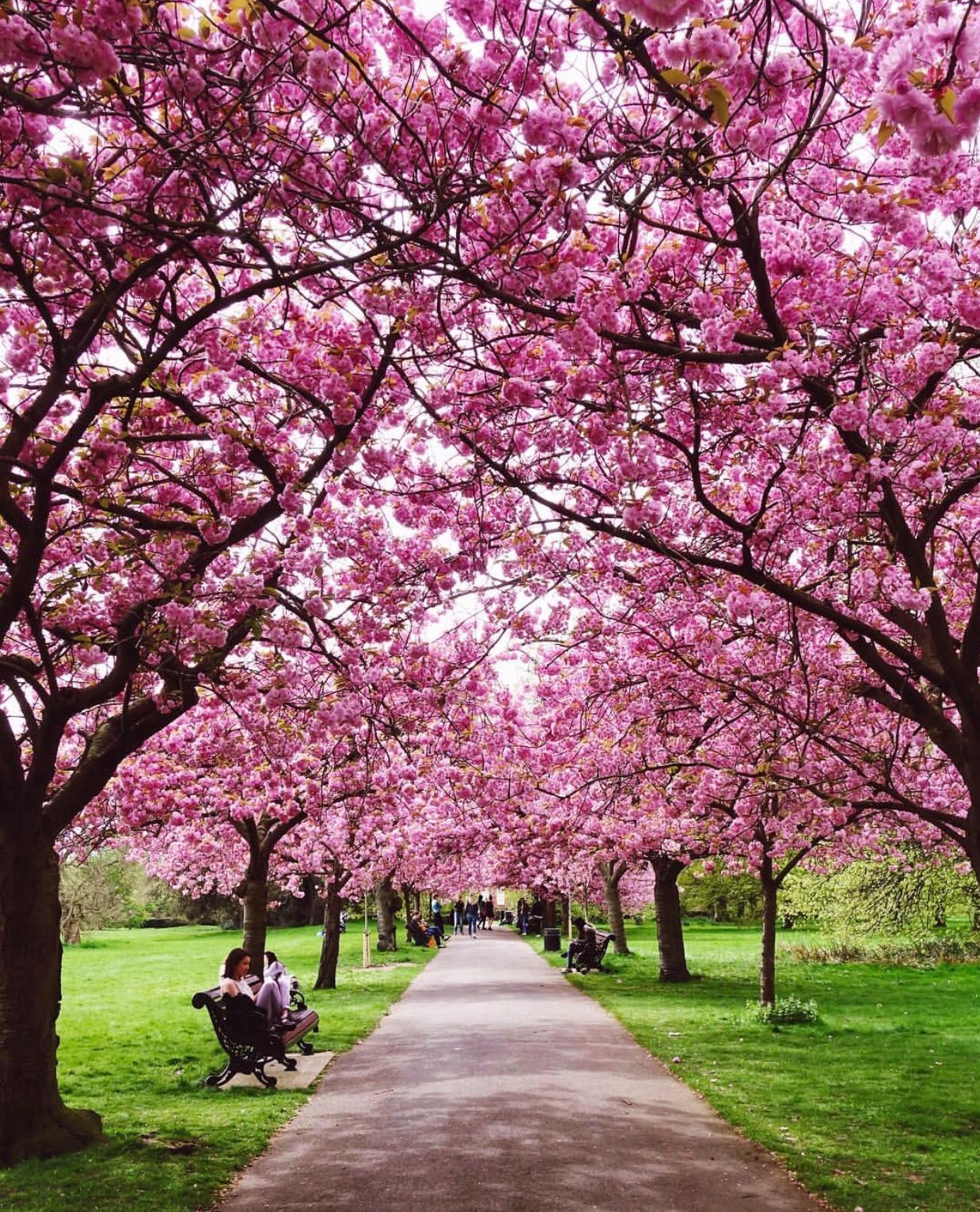 5 most beautiful places to visit in spring, spring pictures, cherry blossoms, indian blogger, british blog, spring in london