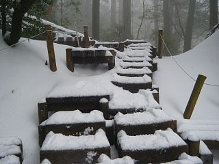Winter hiking ~ Yakushima: A Visitor's Guide