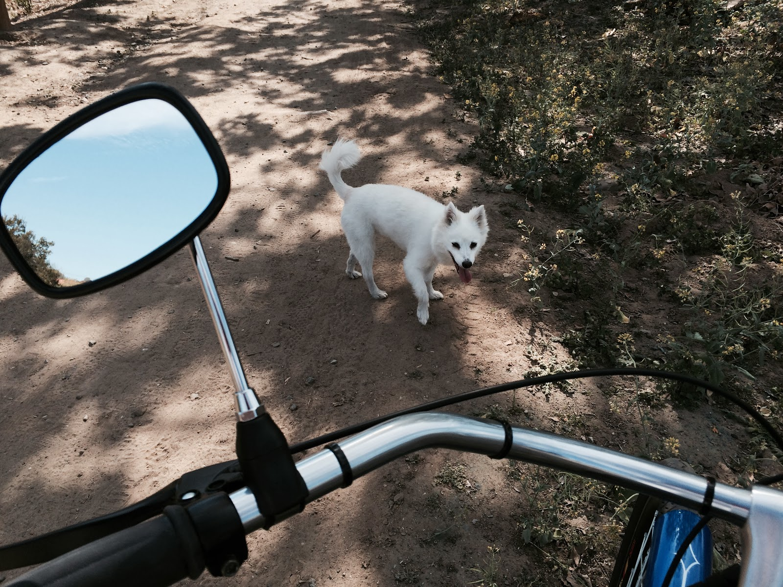 tricycle Mirror, White Dog, Northwest Open Space San Juan Capistrano