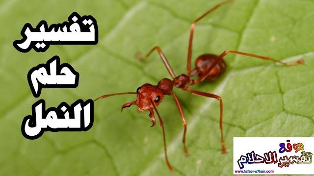 تفسير الاحلام اكل النمل في المنام