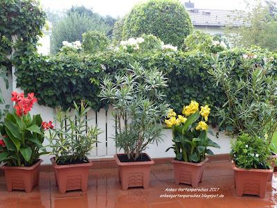 winterharte k belpflanzen sichtschutz wohn design. Black Bedroom Furniture Sets. Home Design Ideas
