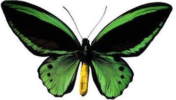Foto de una mariposa con alas extendidas