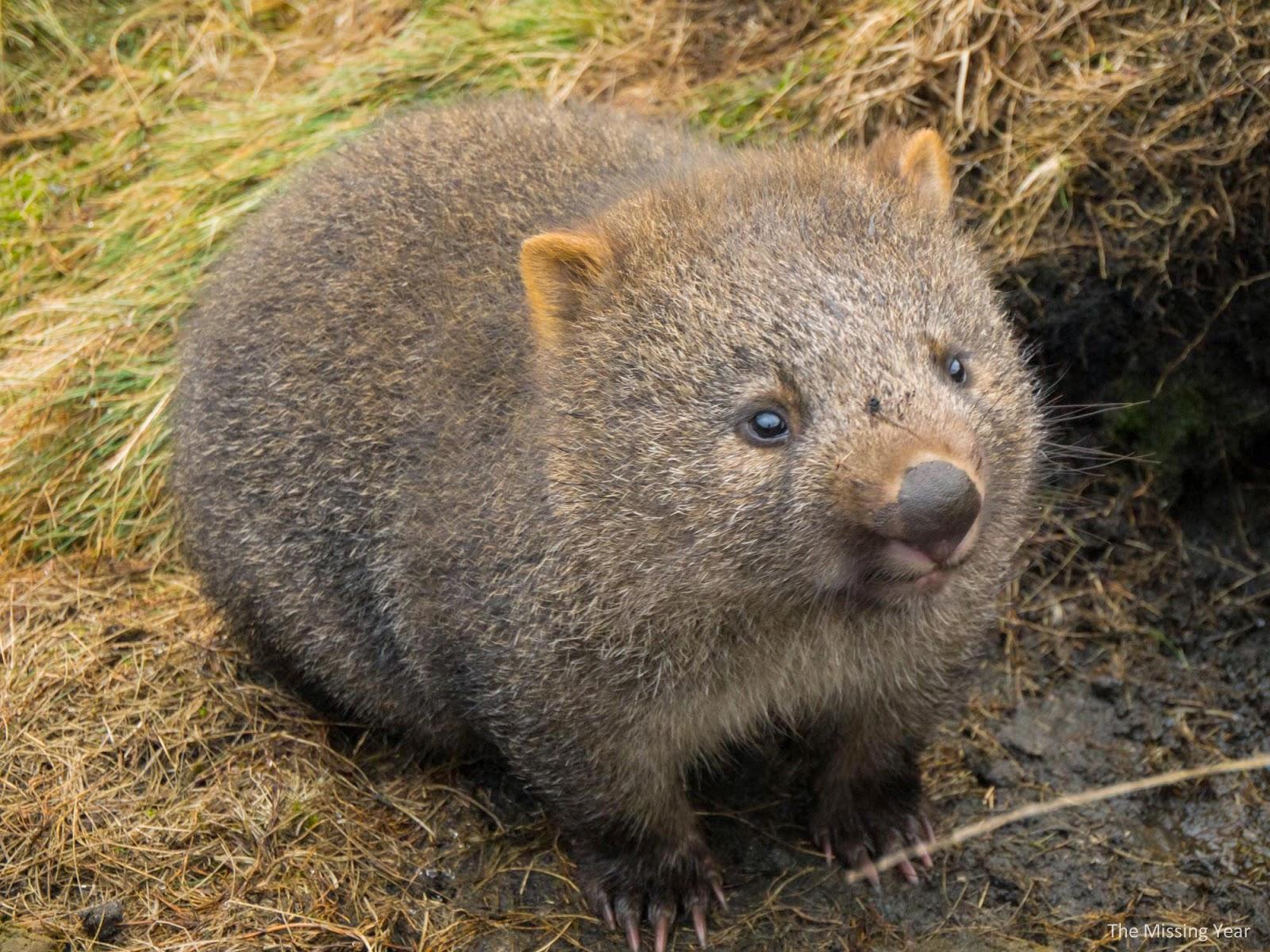 蟬鳴紀異。: 澳洲 黃金海岸 2014 (三) 跟南半球的動物開派對 擁抱樹熊袋鼠 可倫賓野生動物園 Currumbin Wildlife ...