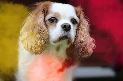 imagenes de perros, imagenes de perros, perro para colorear, dibujos de perros, perritos tiernos