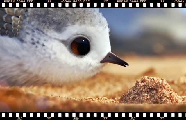 piper pixar online gratuit 2016