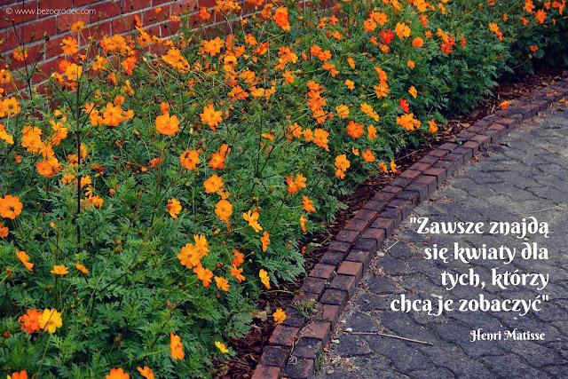 złote myśli o ogrodzie