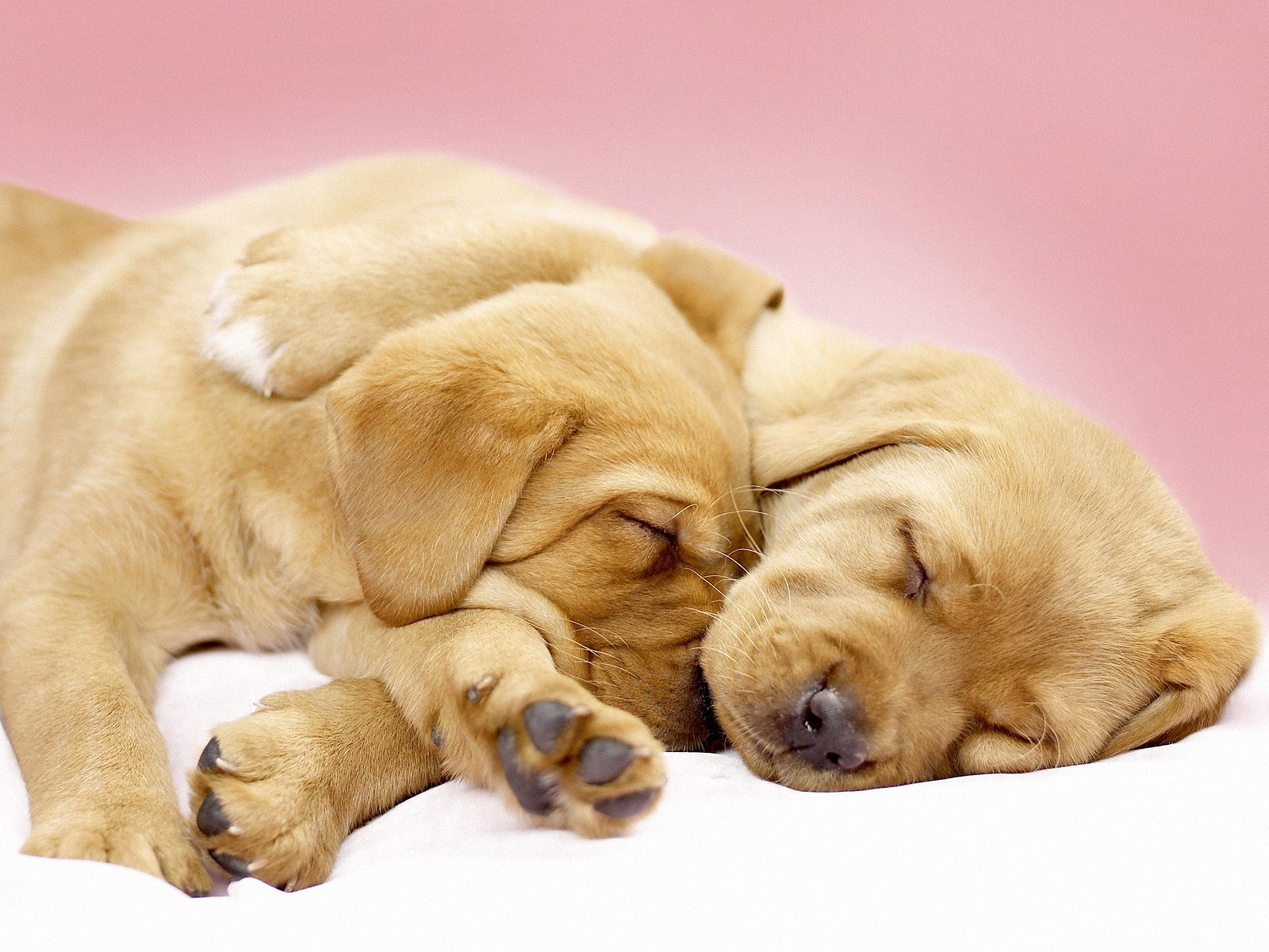 Sleep Together Dog Wallpapers Backgrounds | Dogs ...