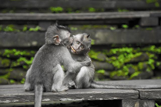 baby Monkey image