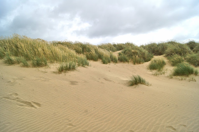 windswept-grass-camber-sands