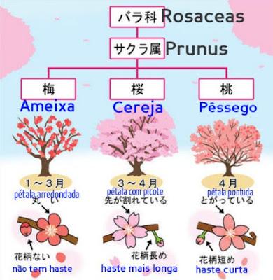 ameixa, cereja e pêssego