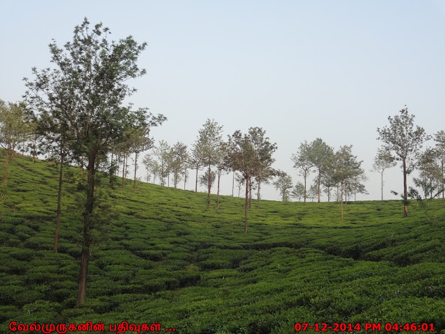 Main Attractions In Wayanad