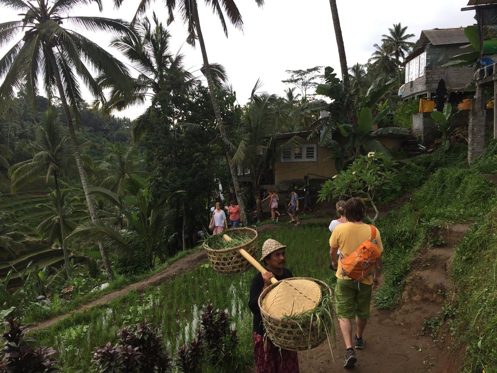 d9c180d204c9a My Solo Adventure 1  Bali-The Rebirth
