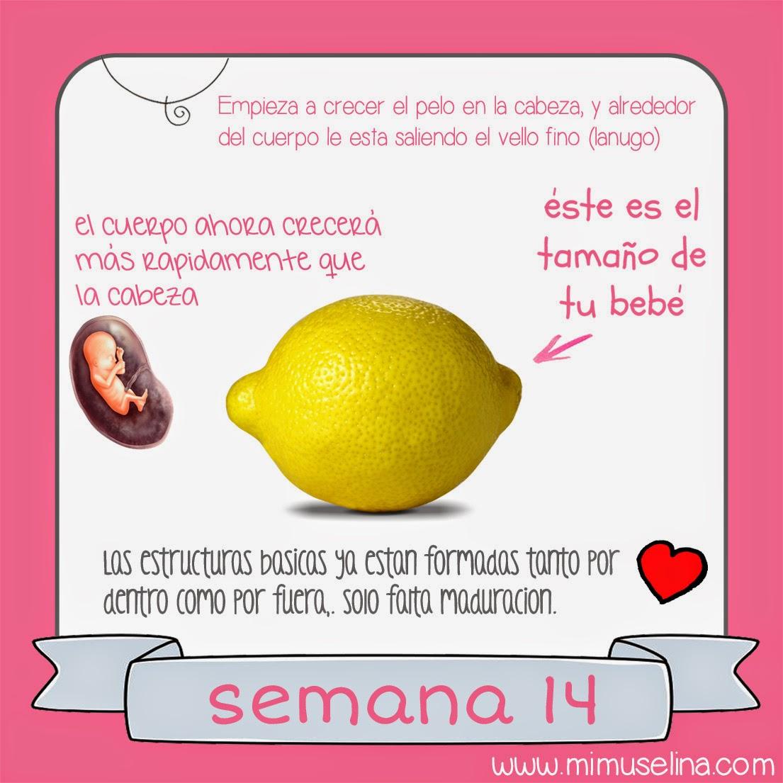 754e084a7 BebeBlog by mimuselina  Semana 14 embarazo. Tamaño y evolución del bebé   mimuselina
