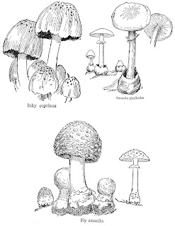 https://4.bp.blogspot.com/-QkW3jDo_KGk/Wx86ee19OxI/AAAAAAAAjGM/QjZKW3mG9hc41H8E4TFJjy-_FxIrDXlTQCLcBGAs/s320/mushroom-drawings-fungi-collage-sheet-digital.jpg