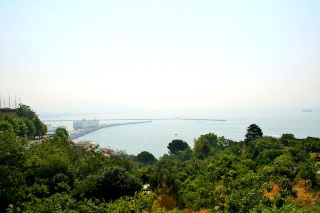 alberi, vegetazione, mare,