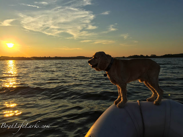 Dog enjoying dinghy boat ride, Virginia