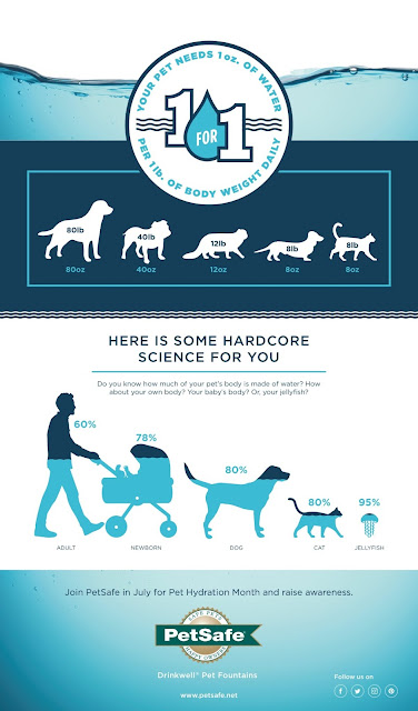 PetSafe® Brand Pet Hydration Month Infographic