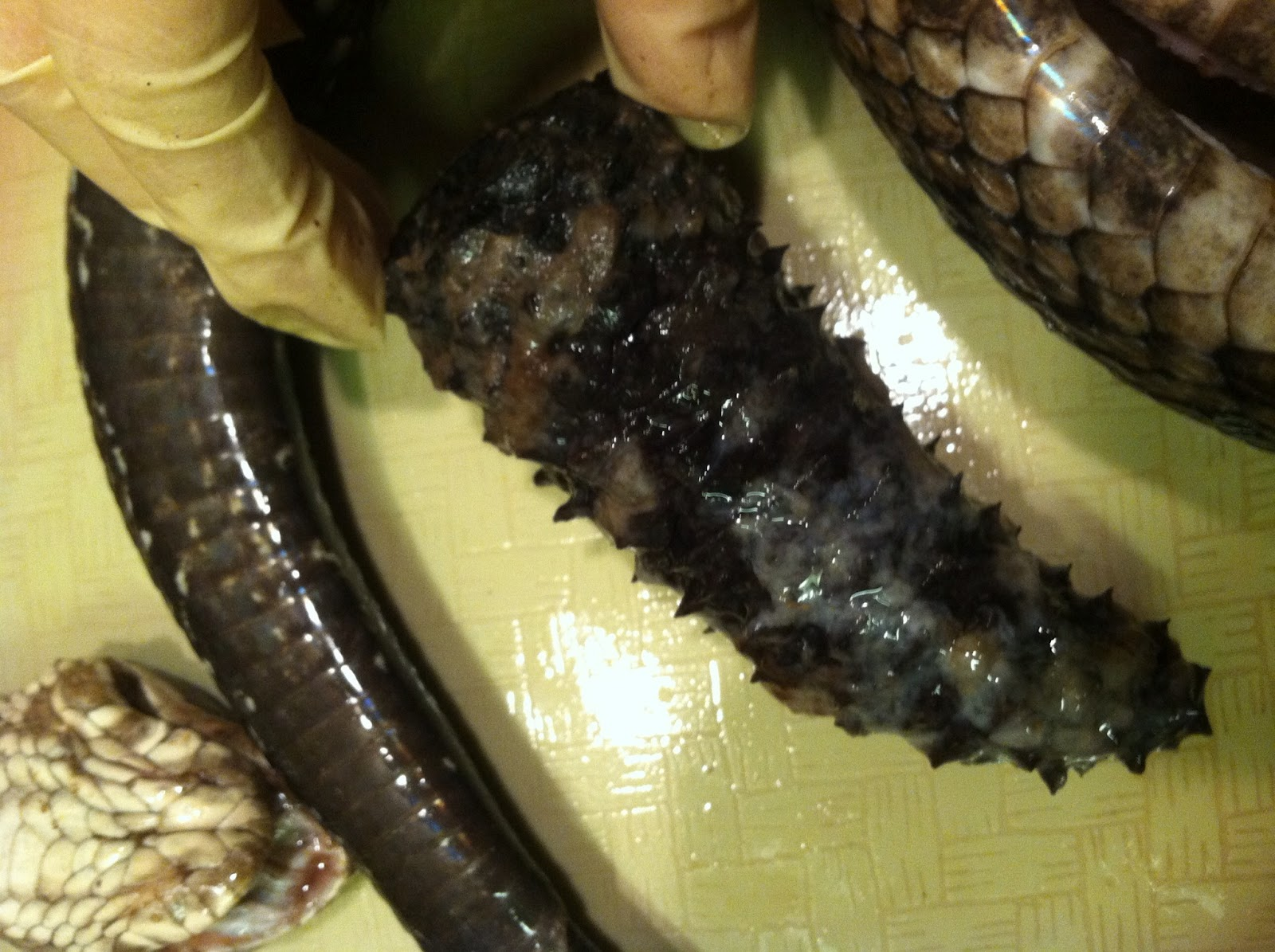 What Does Ball Python Poop Look Like