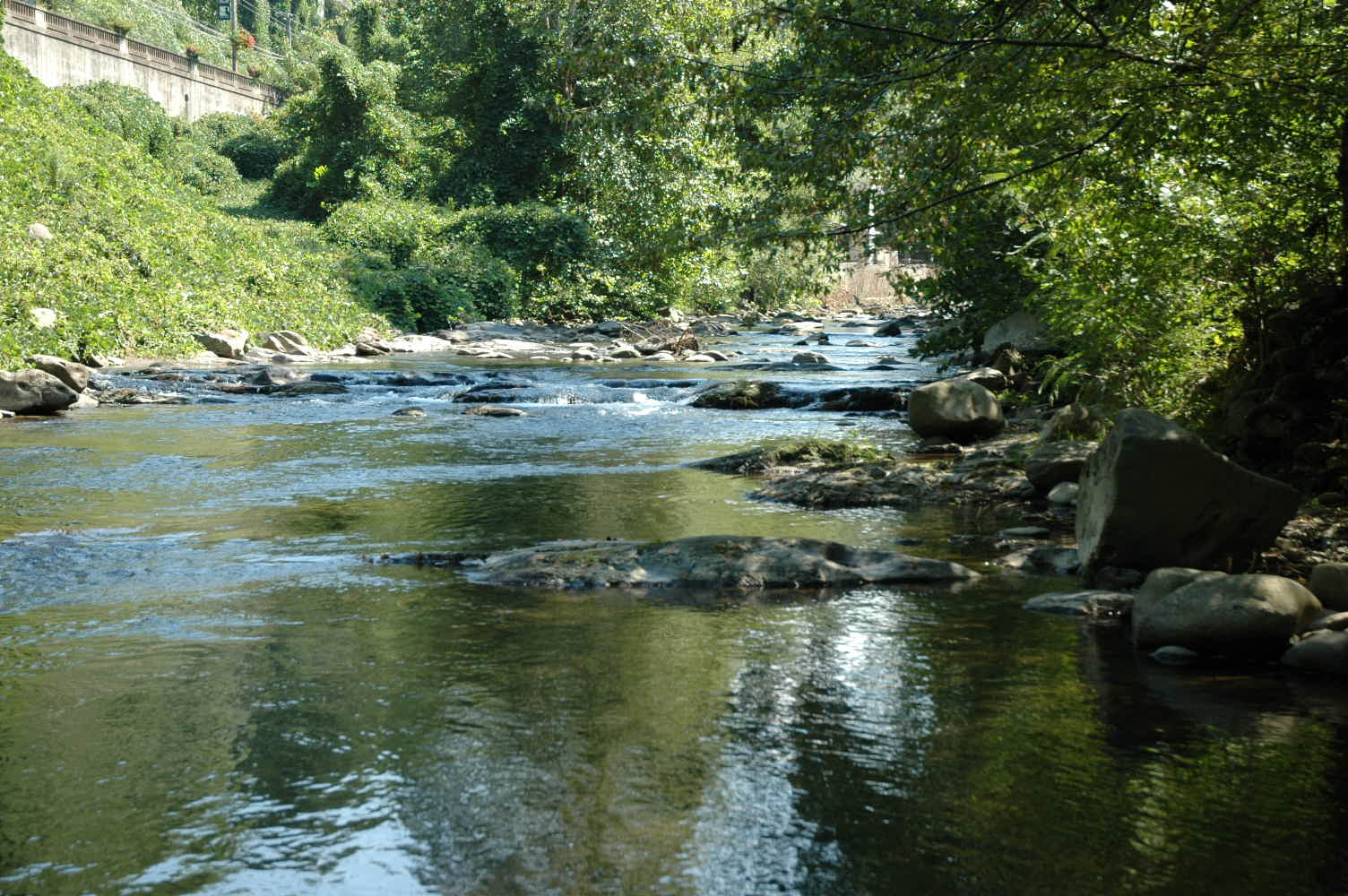 Fishing In Gatlinburg, Tennessee
