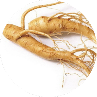 Panas Gingseng Bahan Ramuan herbal tf organik