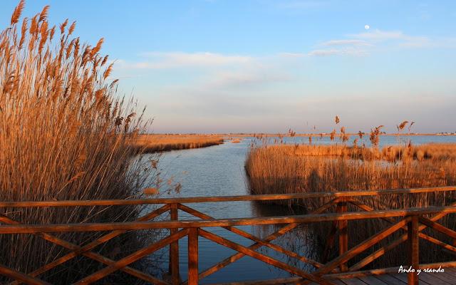 Laguna del Delta del Ebro