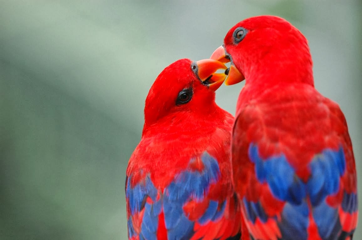 Best & Colourful Birds Wallpapers