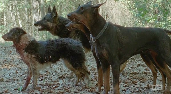 Perros salvajes en The Walking Dead 5x10 - Them