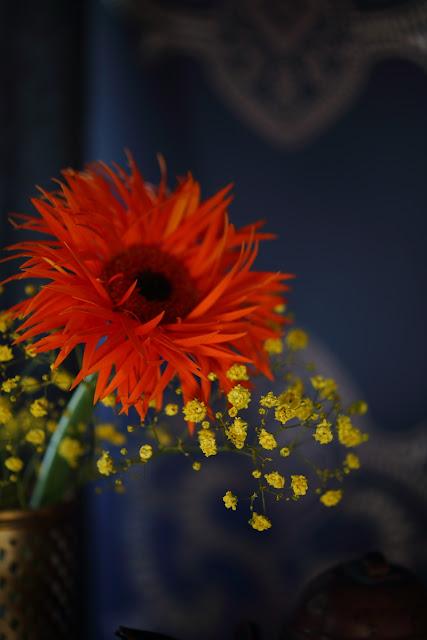 gerbera, still life flowers