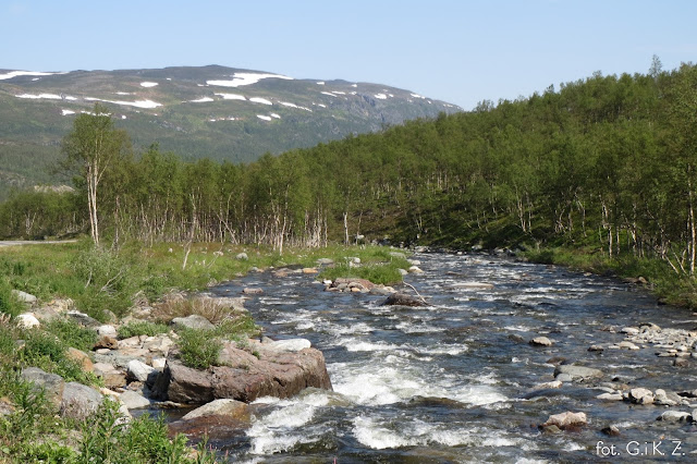 Norwegia, WWF, daylicooking