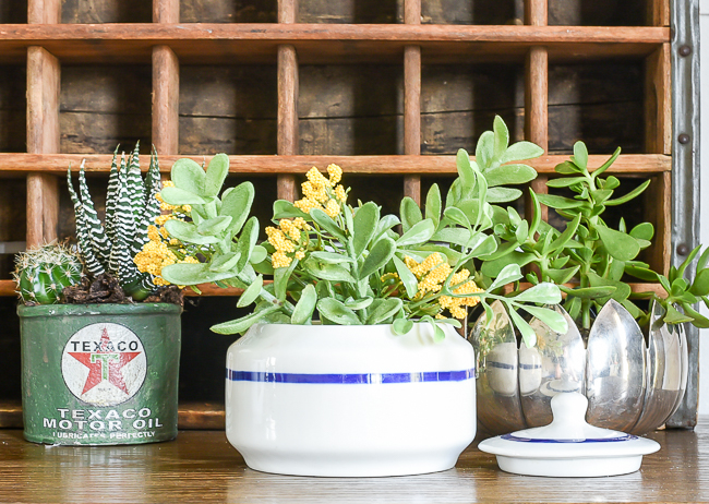 vintage ceramic bowl doubles as a succulent planter