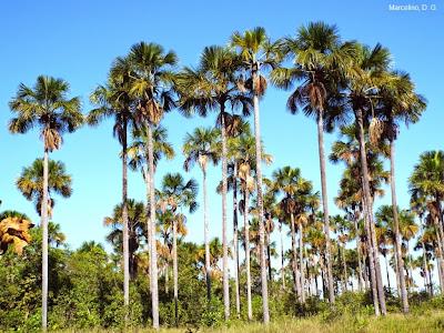 praia-dos-buritis-palmas-tocantins