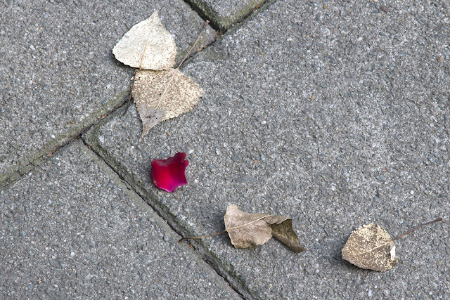 six leaves on the sidewalk